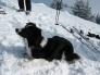 Lawinenhund Zitta